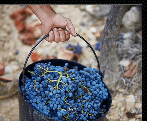 Vinofuturo Bodega BATÁN DE SALAS